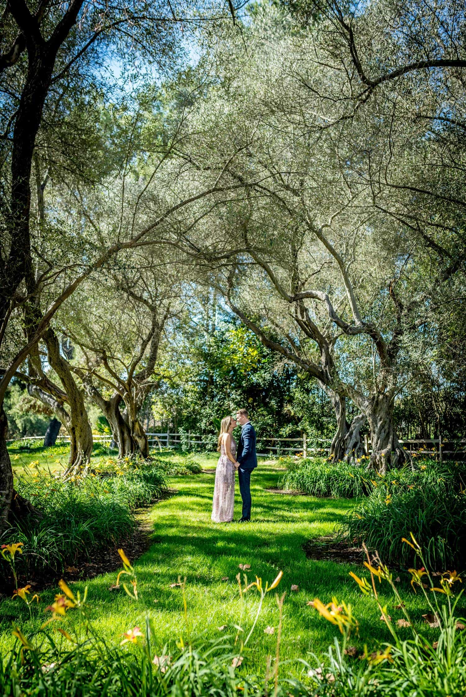 Couple standing under big trees in fallbrook for their engagement session.